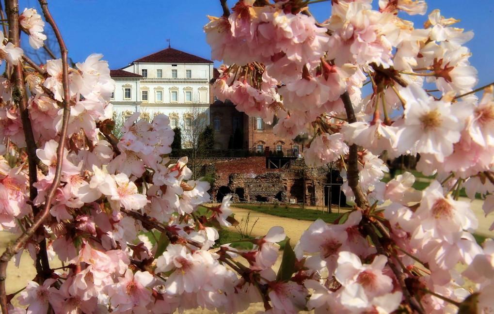 In Piemonte e in Toscana i due giardini più belli d'Italia