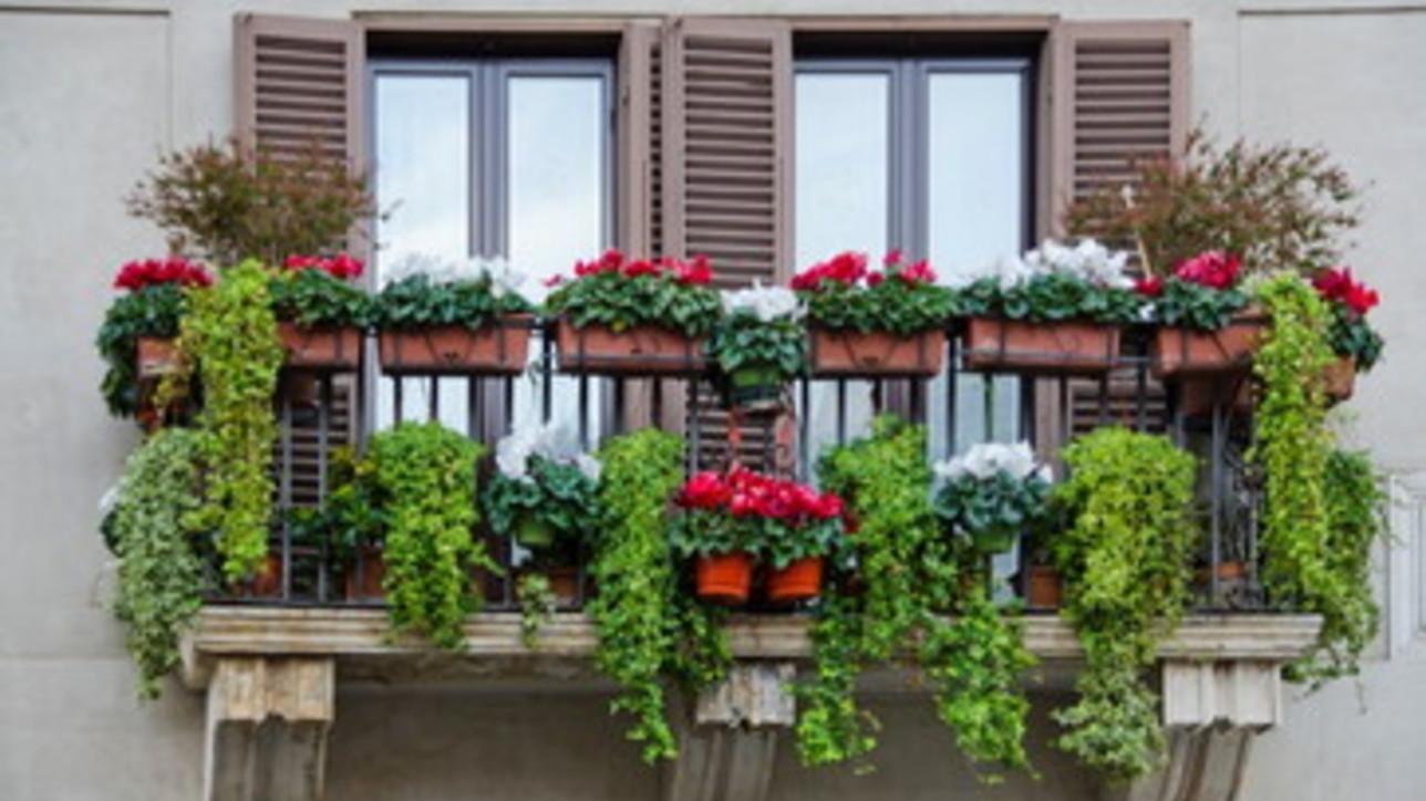 Autunno: cinque idee per un balcone fiorito e bellissimo