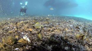 Discariche di rifiuti sui fondali dei mari italiani, la quasi totalità è plastica