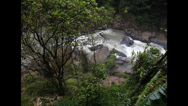Thailandia: 11 elefanti morti in cascata parco nazionale