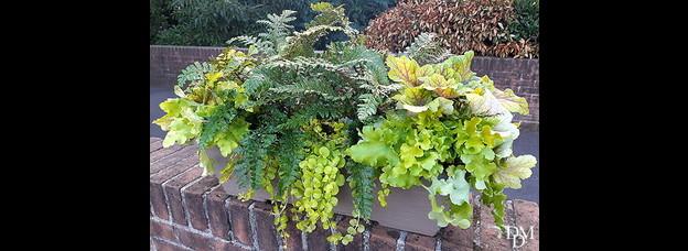 Trionfo di verdi d'inverno