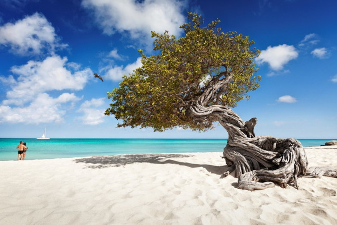 "Aruba ""Isola Felice"", per cinque indiscutibili ragioni"