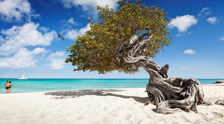 Aruba paradiso terrestre per cinque motivi indiscutibili