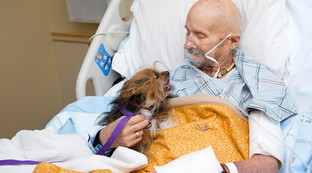 Veterano in fin di vita incontra il suo cane in ospedale per dirgli addio | Guarda le foto