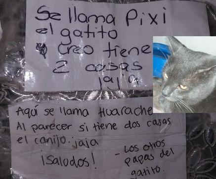 Il gatto con due case: la scoperta della padrona attraverso messaggi attaccati al collare