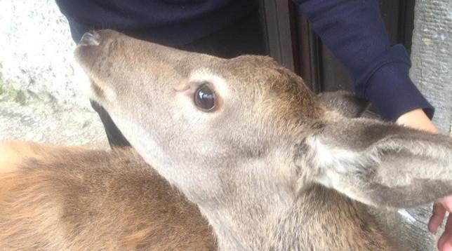 """""""Salviamo Bambi"""", l'appello di Gaia alla Regione Toscana"""
