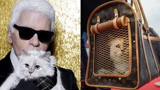 Choupette: addio Chanel, la gatta di Lagerfeld ora usa Louis Vuitton