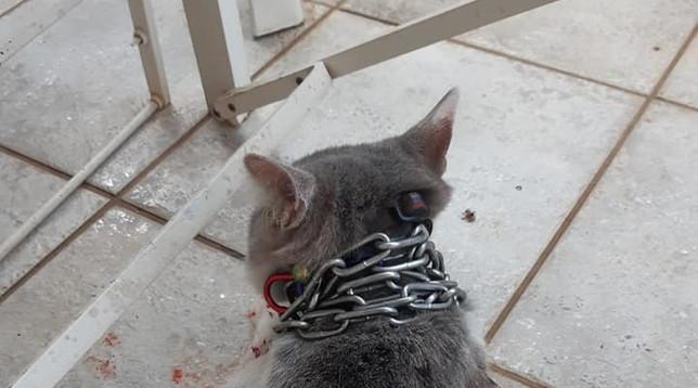 Latina, orrore senza fine: gatto lanciato in un giardino con una catena al collo