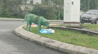 Cane verniciato di verde in Malesia, la rabbia sul Web: