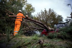 Vento e pioggia, 200 interventi per alberi caduti a Roma