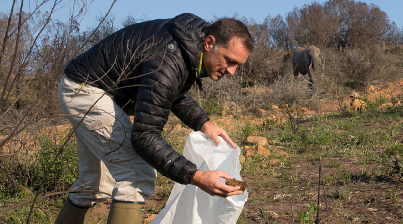 Gin aromatizzato allo sterco di elefante, il nuovo prodotto dal Sudafrica