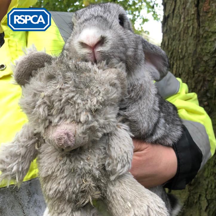 Nigel, il coniglio abbandonato al gelo con il suo peluche