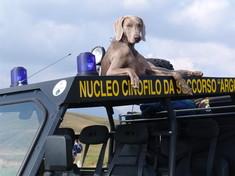Addio a Greta, cane da soccorso che scavò tra le macerie di Amatrice