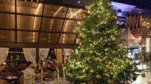 A Marbellal'albero più costoso al mondo: 14 milioni di euro