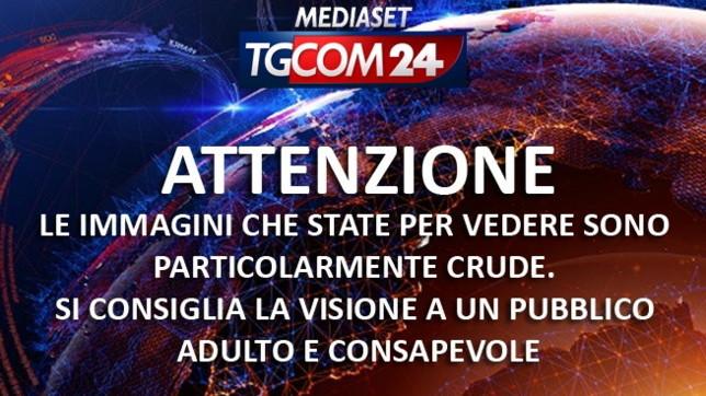 """Cani murati vivi senz'acqua né cibo nel Veronese, i soccorritori a Tgcom24: """"Senza parole davanti a tanta ferocia"""""""