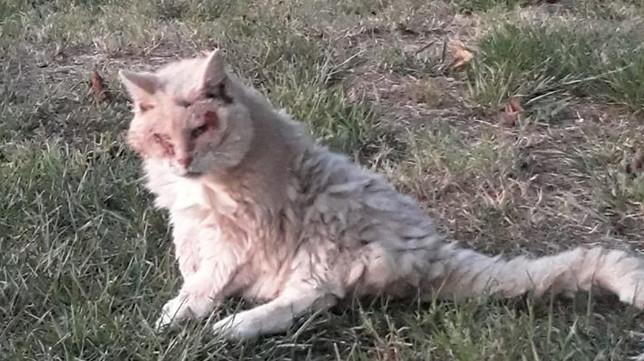 Ecco Micia, la gatta più anziana d'Italia: ha appena compiuto 32 anni