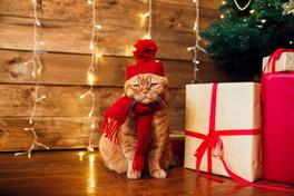 Natale: idee fai da te per regali unici ed originali
