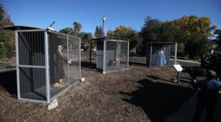 Il presepe in gabbia: è polemica sull'accostamento ai migranti da parte della Chiesa di Claremont