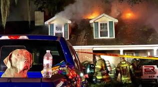 La casa va a fuoco: cane sveglia la famiglia e la salva