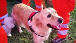 #aspettiamoFrida, Firenze si mobilita per il cane da soccorso avvelenato