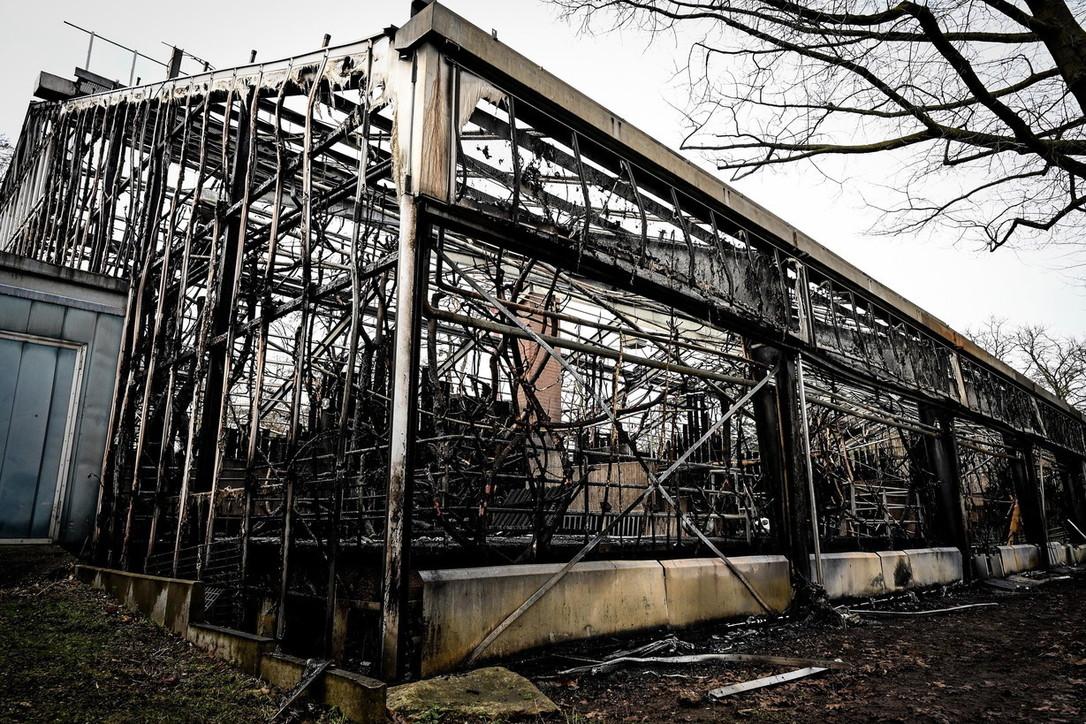 Germania, incendio nello zoo di Krefeld: morti 30 animali