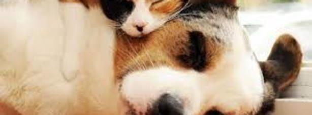 Cani e gatti con la tosse
