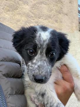 Cade in un pozzo di quattro metri e vi resta intrappolata per cinque giorni: cagnolina salvata in extremis nell'Agrigentino