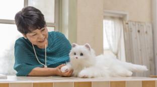 Giappone, il perfetto animale da compagnia è il gatto robot