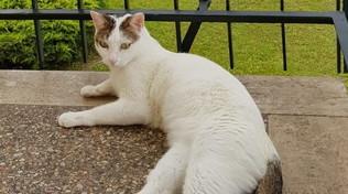 Pordenone, per cercare la gatta smarrita tappezza la città di volantini: ora rischia una multa