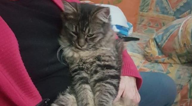 """E' la """"Festa del gatto"""", ecco gli (a)mici di Tgcom24"""