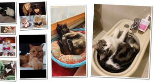 """E' la """"Festa del gatto"""", ecco gli (a)mici di Tgcom24- Parte 3"""