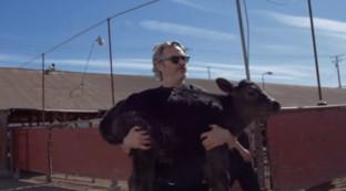 Joaquin Phoenixsalva un vitellino e la sua mamma dal macello