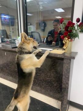 Texas, cane scappa da casa e poi denuncia la sua scomparsa alla polizia