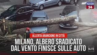 Milano, albero sradicato dal vento finisce sulle auto