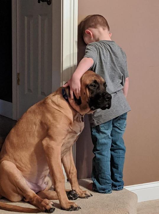 Usa, il bambino è in punizione: il cane va con lui per non lasciarlo solo