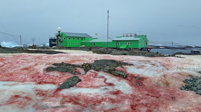 Antartide, la neve è rossa come il sangue