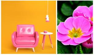 Arredo: lasciati ispirare dalle primule per portare la primavera in casa