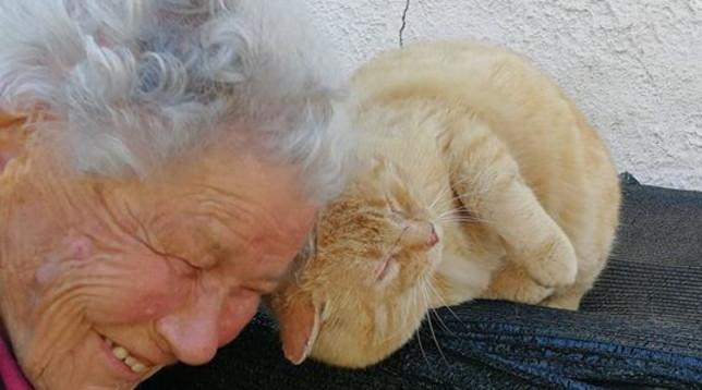 A oltre tre anni dal terremoto del Centro-Italia, nonna Dora ritrova il gatto Mimmo