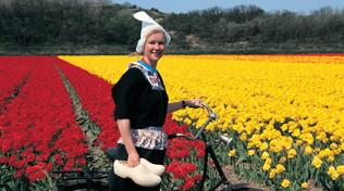Olanda, l'arcobaleno dei tulipani fioriti