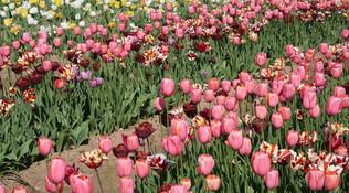 La primavera è arrivata