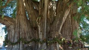 Undici alberi straordinari da tutto il mondo