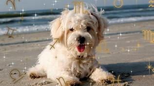 Pet Astrology: l'Oroscopo per il tuo cane