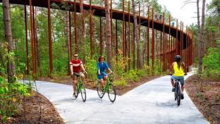 A piedi o in bici tra le cime degli alberi