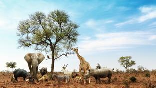 Animali selvatici: i luoghi al top per ammirarli