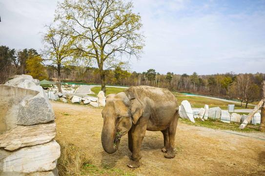 Niente visitatori, il coronavirus mette in ginocchio anche gli zoo safari