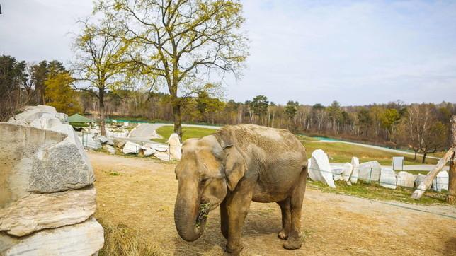 Niente visitatori, il virus mette in ginocchio anche gli zoo safari | Foto