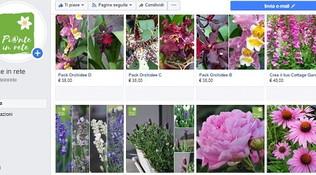 Quarantena: piante e fiori li trovi sui social