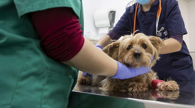 I veterinari si preparano a gestire i casi Covid-19 tra gli animali