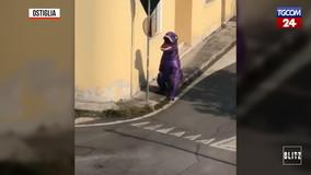 Mantova, un T-Rex viola i divieti del coronavirus