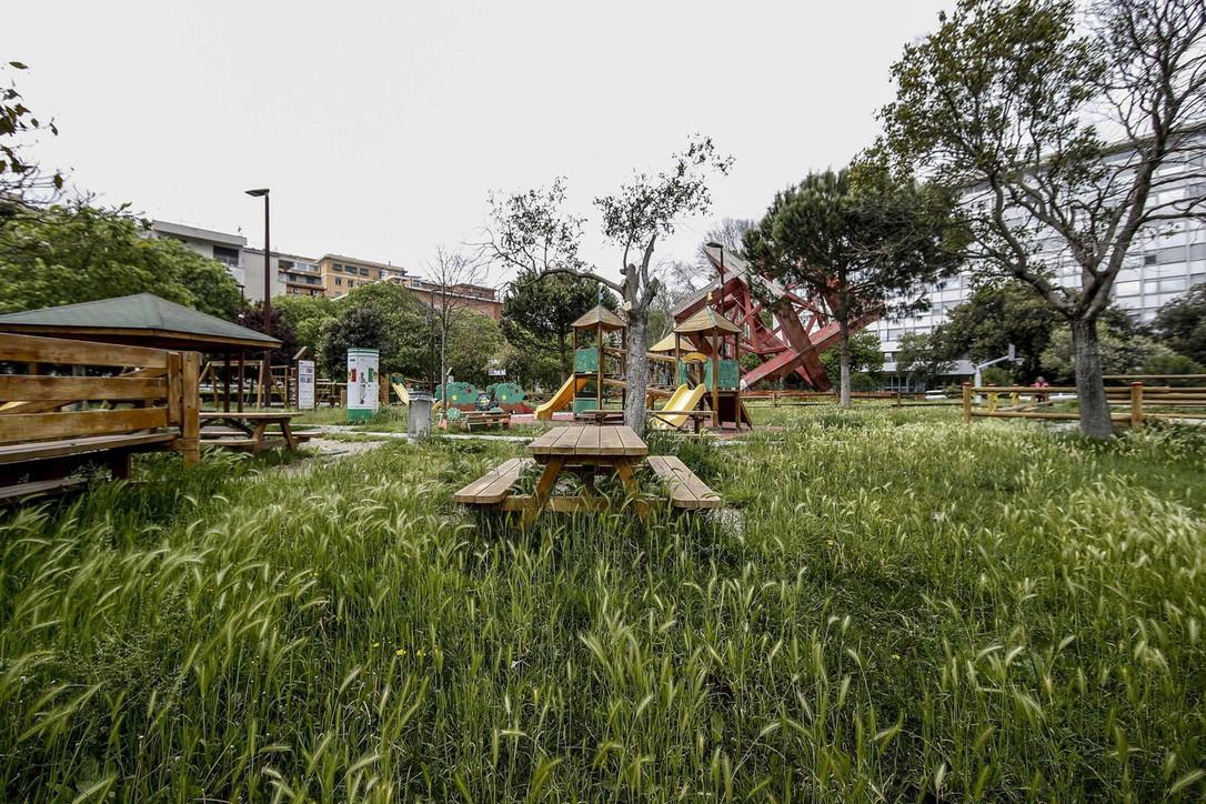 Roma, nel parco bimbi dopo due mesi di lockdown è cresciuto il grano